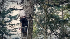 Tree Surgeon Working Up Ladder Stock Footage