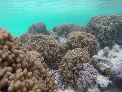 Many soft corals on the Maldives Stock Footage