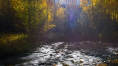 Timelapse of Fall Foliage by River at Daytime in Eastern Sierra -Pan Right- Stock Footage