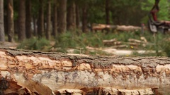 Felled timber, log on ground, forestry machinery in background Stock Footage