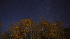 Astro Timelapse of Stars over Aspen Fall Foliage in Eastern Sierra -Tilt Down- Stock Footage