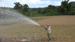 Cuban farmer is watering tobacco field with seedlings. Pinar del Rio Stock Footage