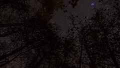 MoCo Astro Timelapse of Stars over Fall Foliage in Eastern Sierra -Zoom Out- Stock Footage