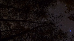 MoCo Astro Timelapse of Stars over Fall Foliage in Eastern Sierra -Vertical- Stock Footage
