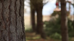 Pine tree trunk and bark, log harvesting in background Stock Footage