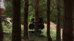 Pine forest cut-to-length logging - harvester fells tree for timber Stock Footage