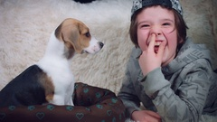 4k Shot of a Beagle Puppy Dog with Child Having Fun Together Stock Footage