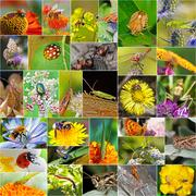 Insects in nature, Siberia, Novosibirsk oblast, Russia Stock Photos