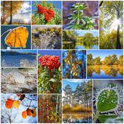 Autumn in nature, Siberia, Novosibirsk oblast, Russia Stock Photos