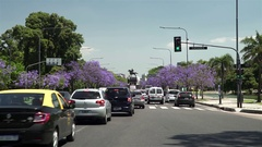 Buenos Aires traffic with Jacarandas trees Stock Footage