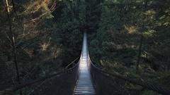 Vancouver Pacific Northwest Rainforest Pedestrian Suspension Bridge Stock Footage