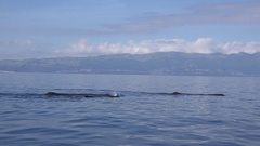 Sperm whales swim very calm besides the boat, with  whale sounds Stock Footage
