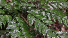 Rain drops falling on plant in forest Stock Footage