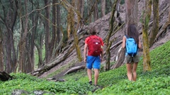 Hiking people on hike on green forest trail with backpacks living active life Stock Footage