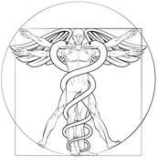 Vitruvian Man Caduceus Stock Illustration