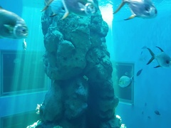 Fish in the coral reef in Gulf of Thailand, in aquarium Stock Footage
