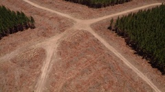 Timber plantation harvesting area - clearfell logging aerial track back Stock Footage