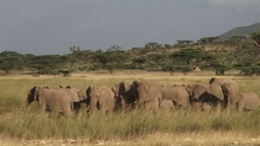 A group of worried elephants standing together Stock Footage