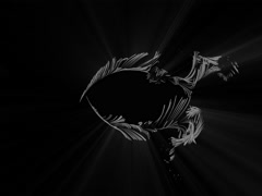 Abstract Fractal Black and White Feathers Stock Footage