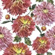 Wildflower aster flower pattern in a watercolor style isolated Stock Illustration