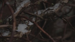 Cinestyle - some snow on a branch with camera move Stock Footage