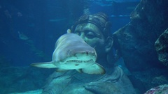 Shark in the water Stock Footage