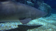 Sharks side view Stock Footage