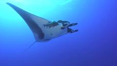 Giant manta ray swimming at sunlight - Socorro, San Benedicto island Stock Footage