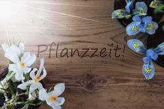 Sunny Crocus And Hyacinth, Pflanzzeit Means Planting Season Stock Photos