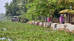Slow Motion along River Bank by Village Woman Washes in Tropics Stock Footage
