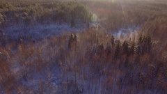 Flying over winter forest trees sunny weather top view 4k aerial vertical flight Stock Footage