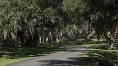 Empty canopy road of live oak trees, Georgia, USA Stock Footage