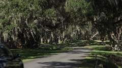Car drives under live oak trees, canopy road, Georgia, USA Stock Footage