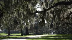 Car drives under live oak trees, Georgia, USA Stock Footage