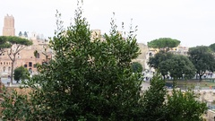 Forum of Augustus in Rome, Italy Stock Footage