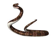 3D Rendering Gaboon Viper Snake on White Stock Illustration