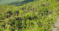 Moist forest in South America (PERU, Tarapoto) Stock Footage