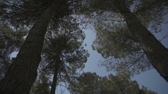 Slow motion gimbal shot under grass and trees looking up to the sky Stock Footage