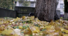 Autumn City Park With Rain Background, Fall. Raining. Wet, Rainy Weather. Stock Footage