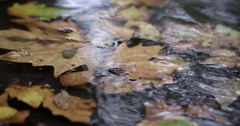 Rain in Autumn. Raindrops Fall on a Concrete Walkway With Water and Fallen Stock Footage
