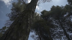 Slow motion gimbal shot under trees looking up to the sky Stock Footage