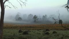 Tasmania alpine landscape on a misty morning Stock Footage