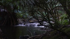 River flows through Tasmanias temperate rainforests Stock Footage