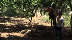 Cuban boy with a horse at a ranch.  Vinales, Cuba Stock Footage