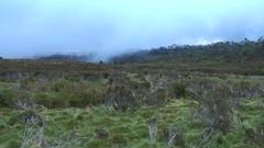 Tasmania alpine shrub landscape Stock Footage