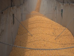 Agriculture Harvest  loading Corn in trailer  Stock Footage