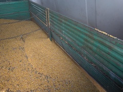 Agriculture Truck Loading Corn in silos storage  Stock Footage