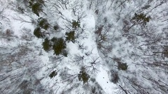 Aerial footage. Flying over winter forest. Uplift and rotate Arkistovideo