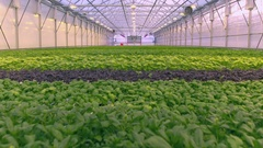 Aerial - Herb cultivation Stock Footage