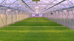 Aerial - Inside greenhouse hall with different types of herbs Stock Footage